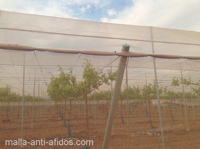 malla anti-áfidos en en cultivo al aire libre