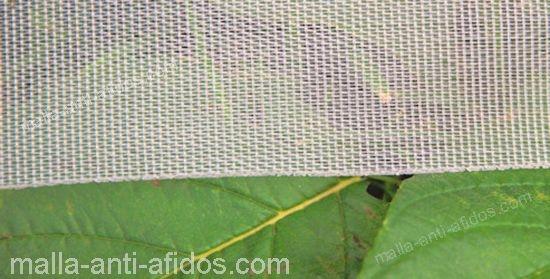 muestra de malla anti áfidos cubriendo planta