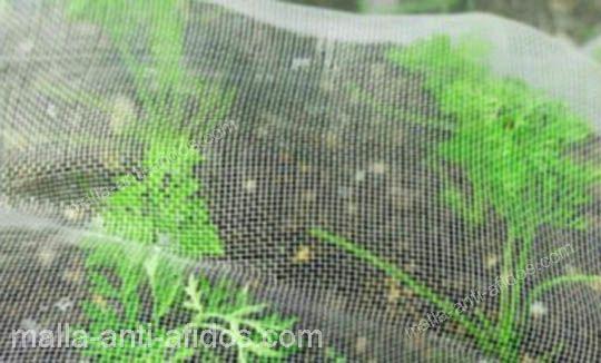 malla anti insectos cubriendo cultivo.